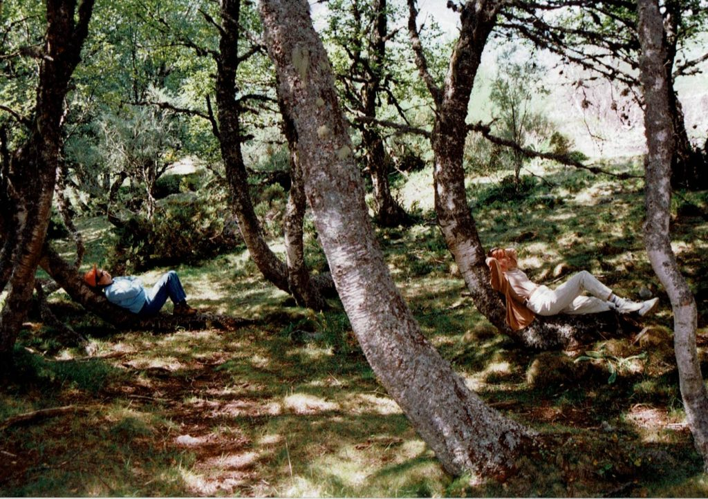 Bosque de Muniellos en Asturias