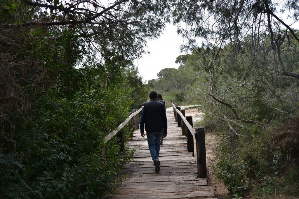 puente madera en el saler