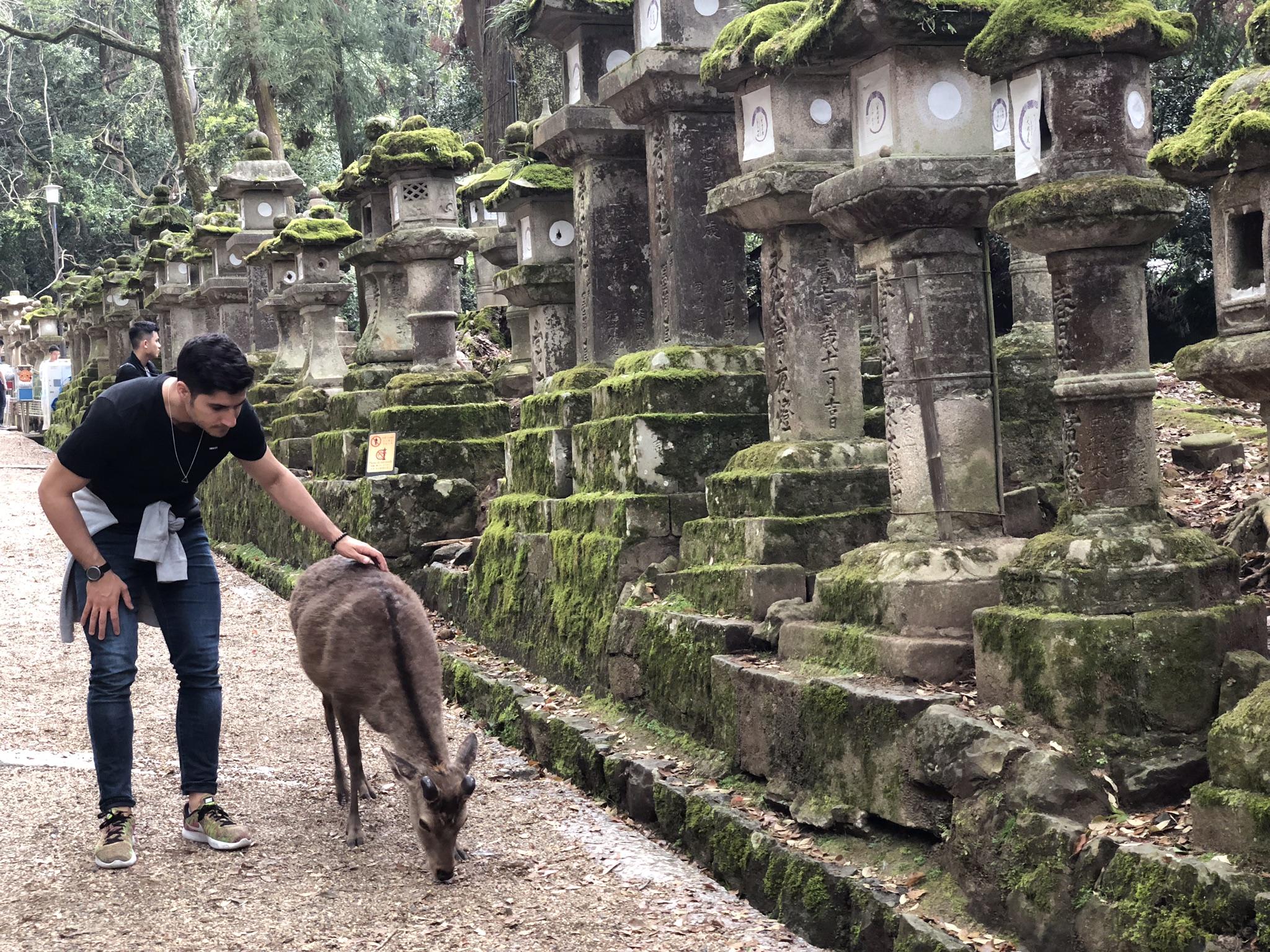 Los ciervos son los dueños de Nara